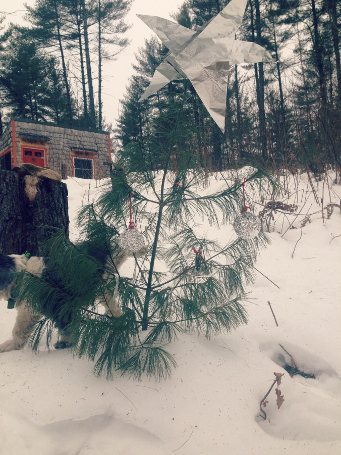 Pants wasn't into the Christmas tree.